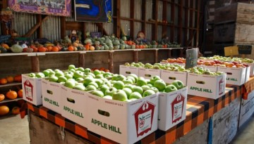 Day Trip to Apple Hill Orchards U-Pick Apple Ranches