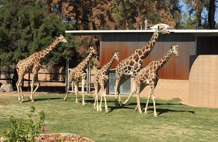 Fresno Zoo