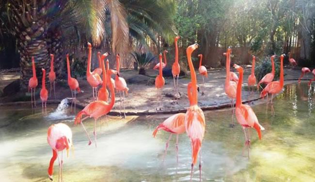 Fresno Zoo Day Trip