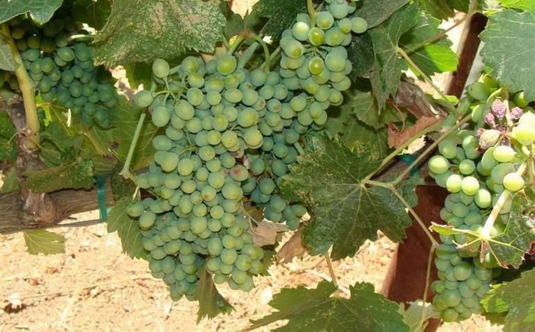 lodi-wine-country