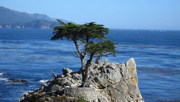 Monterey Bay Day Trip Things to Do Attractions
