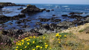 Mendocino County Day Trips Things to Do