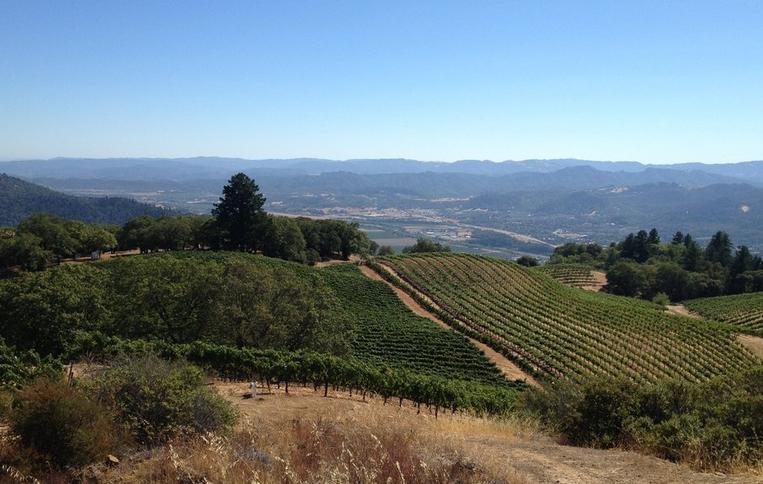 Mendocino County Wine Tasting