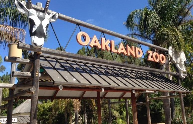 oakland zoos newest addition - 769×494