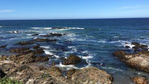 Pescadero San Francisco Day Trip