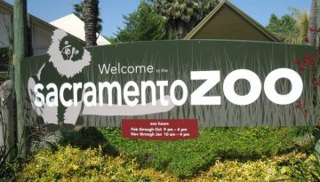 Sacramento Zoo Day Trip an Affordable Family Adventure