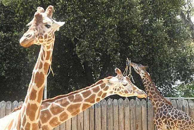 Sacramento Zoo Family Day Trip