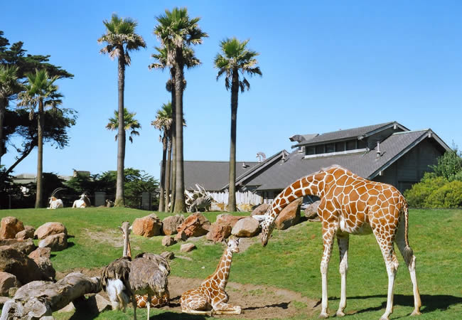 San Francisco Zoo Discount Tickets