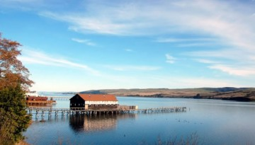 Tomales Bay Day Trip From San Francisco