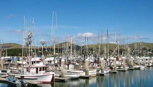 Bodega Bay San Francisco Day Trip Things To Do