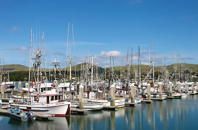 Bodega Bay San Francisco Day Trip Things To Do