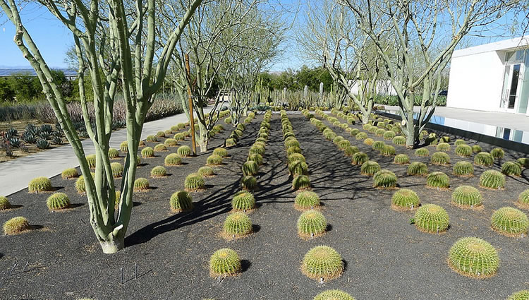Cactus Garden Sunnylands Rancho Mirage