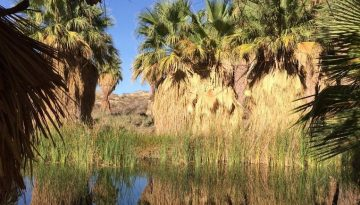 Coachella Valley Preserve Near Palm Springs