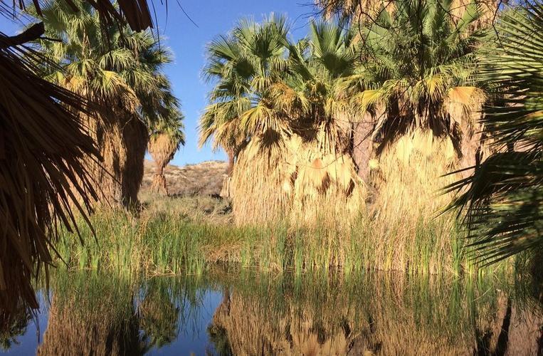 Coachella Valley Preserve Near Palm Springs