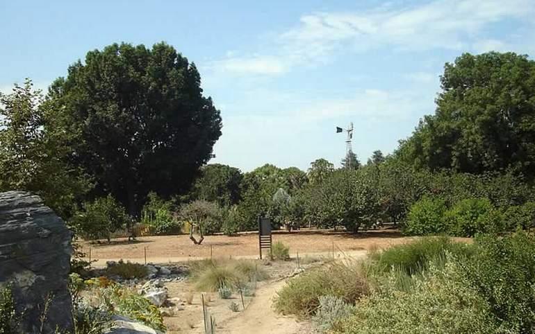Fullerton Arboretum