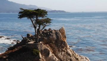 Carmel-by-the-Sea Day Trip
