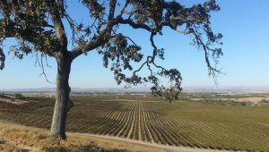 Paso Robles Day Trip Activities Attractions