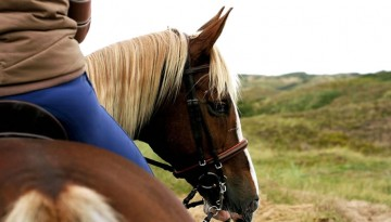 Temecula Horseback Riding Wine Tours