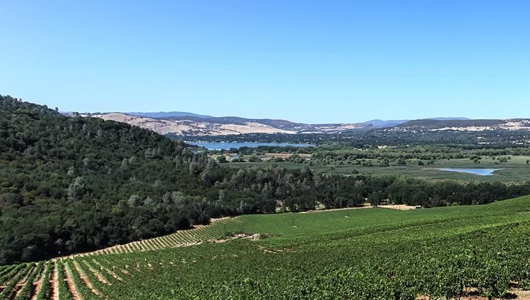 Winery near Clear Lake California