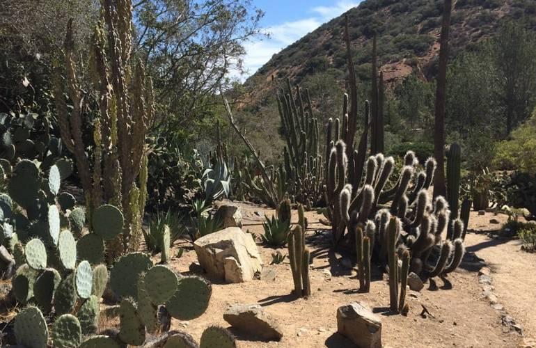 Wrigley Botanical Gardens Catalina Island