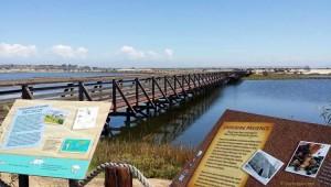 Bolsa Chica Wetlands Day Trip