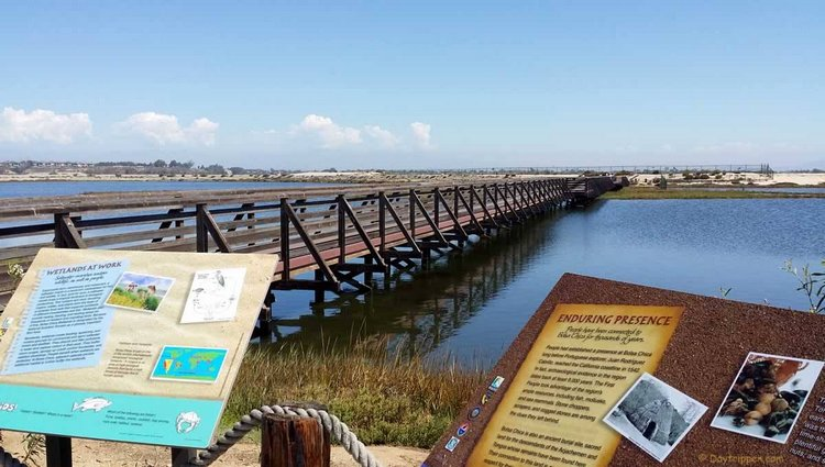 Bolsa Chica Wetlands - Southern California Bucket List