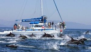 Dolphin Safari Whale Watching