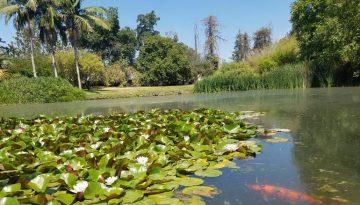 Fullerton Arboretum Day Trip Orange County Garden Oasis