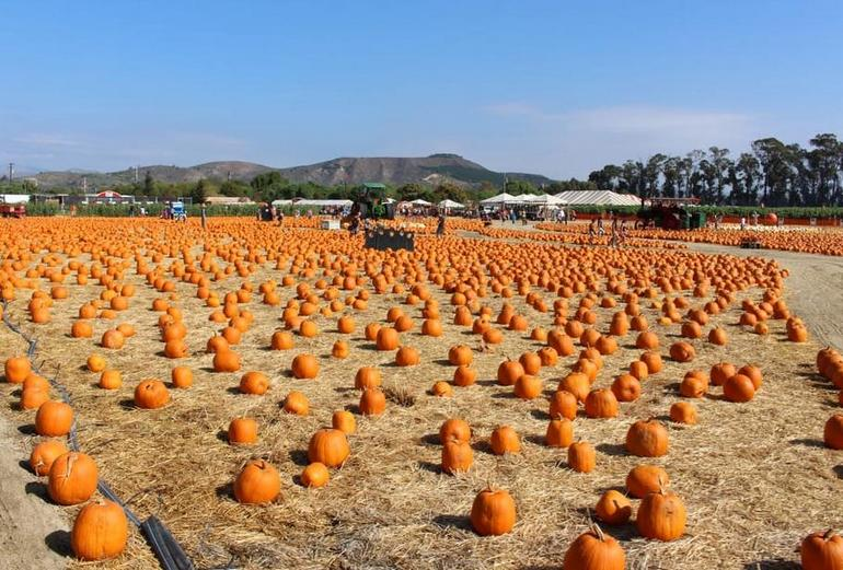 Underwood Family Farms Fall Festival