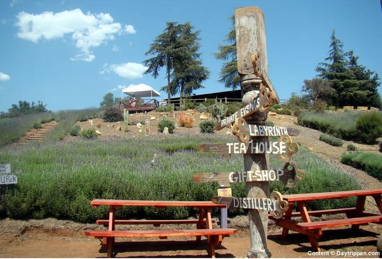 Keys Creek Lavender Farm San Diego County