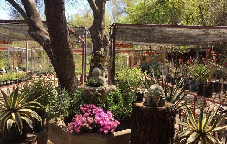 Living Desert Gardens