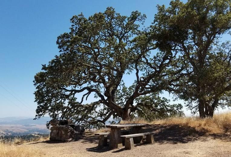 Mount Diablo State Park Camping