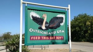 California Roadside Attractions