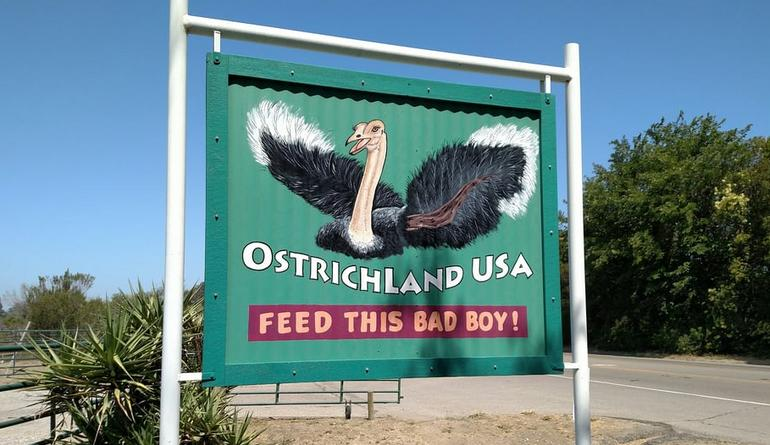 Ostrichland USA Feed This Bad Boy
