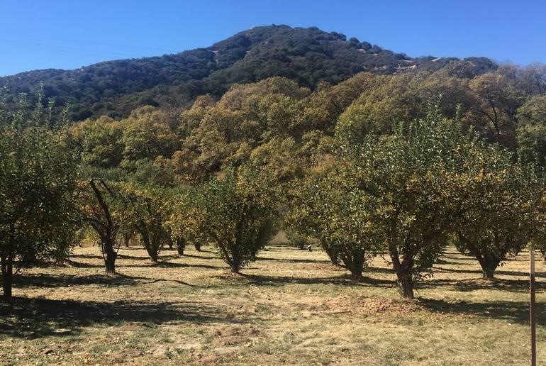 Riley's Farm Oak Glen U-Pick Orchard