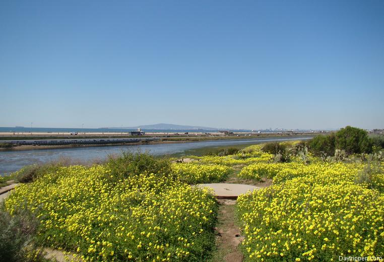 Bolsa Chica Wetlands Huntington Beach