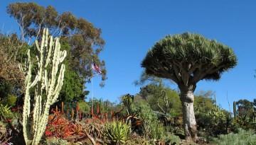 San Diego Botanic Garden Day Trip