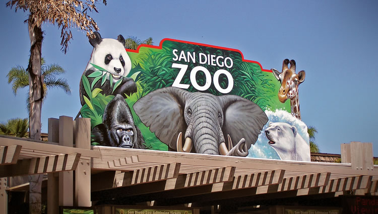 San Diego Zoo Day Trip