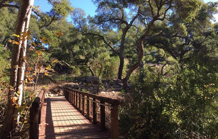 santa barbara botanic garden day trip connect with nature