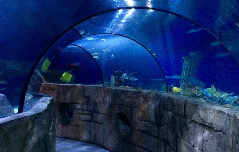 Sea Life Aquarium Discount Tickets Carlsbad California