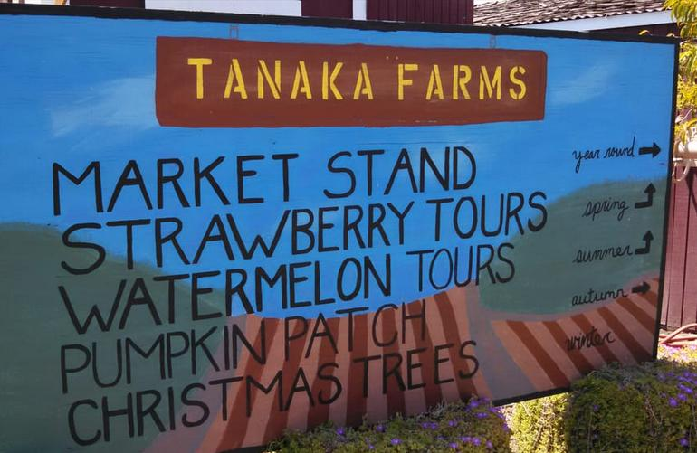 Tanaka Farms Irvine Southern California U-Pick
