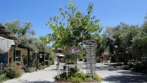 Bernardo Winery San Diego Day Trip