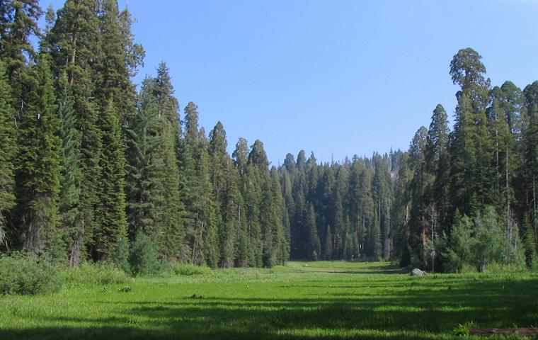 Sequoia-Kings Canyon Park