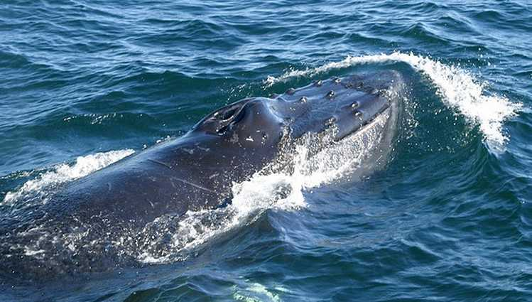 Dana Wharf Whale Watching Discount Tickets