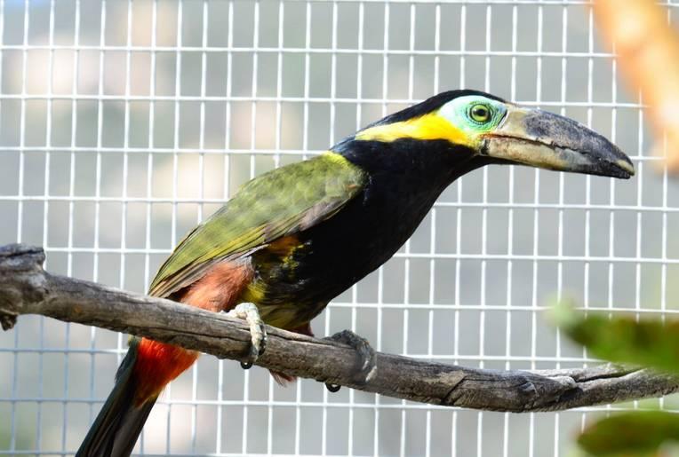 Emerald Forest Bird Gardens Fallbrook California