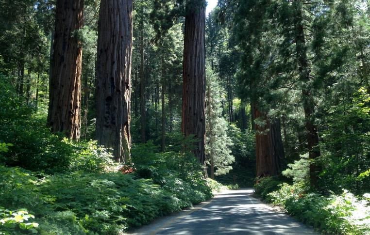 Sequoia-Kings Canyon Parks