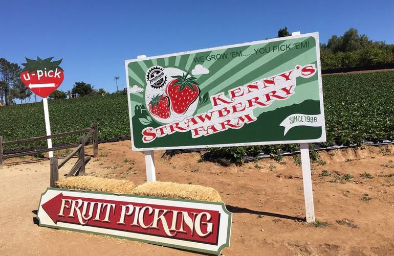 Kenny's Strawberry Farm Fallbrook