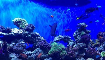 Birch Aquarium at Scripps Day Trip