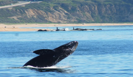 Newport Coast Whale Watching