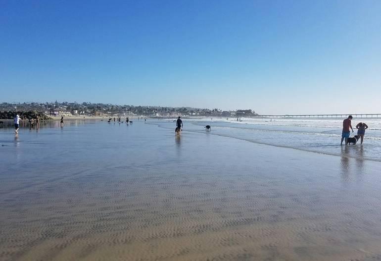 Ocean Beach Dog Beach